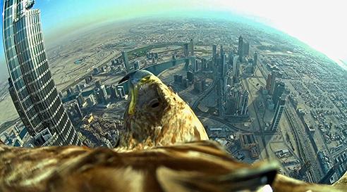 Un aigle à Dubaï
