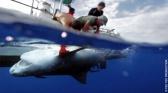 Attaques de requins à la Réunion