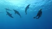 Conversations avec les dauphins