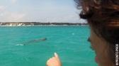 Karen au pays des Dugongs