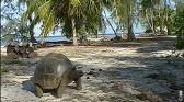 La tortue après l'eden