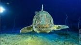 Le Coelacanthe, plongée vers nos origines