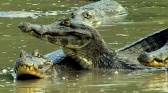 Les cycles du Pantanal