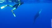 Polynésie la quête des profondeurs