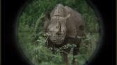 Rhino Dollars