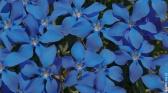 Les secrets des fleurs sauvages