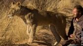 Sirga, le destin d'une lionne