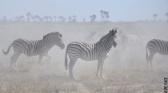 Okavango - Les meilleurs moments