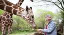 Anne Dagg la passion des girafes