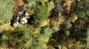 France Terres sauvages - la forêt
