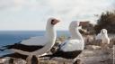 Galápagos - l'archipel sauvage