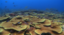 Nature's greatest secrets : the coral triangle