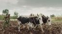Main basse sur les terres agricoles