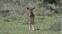 Naître et survivre dans le Serengeti