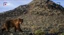 Sur les traces de l'ours de Gobi