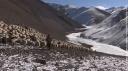 Tsering, bergère au Ladakh