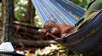 Borneo grandeur nature