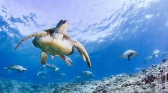 L'incroyable voyage de Bunji la tortue