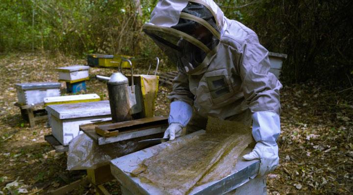 Une terre sans abeilles (c) Ekla Productions