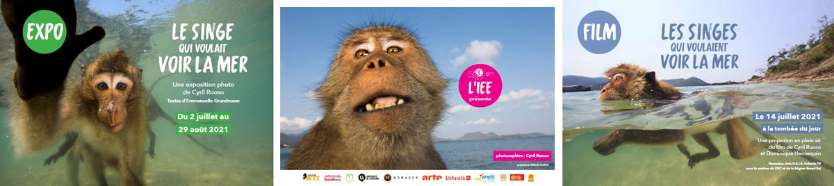 Expo : Le singe qui voulait voir la mer