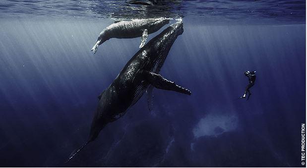 Quand les baleines et tortues nous montrent le chemin