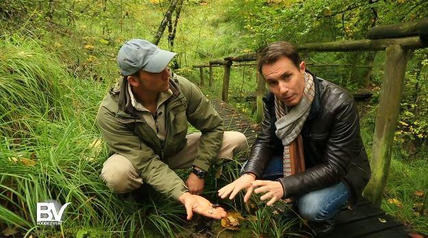 Bougez Vert dans le parc national des forêts