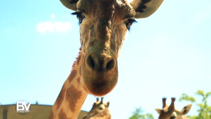 Bougez Vert au Parc Zoologique de Paris