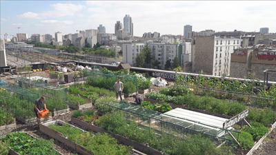 Des légumes dans la ville