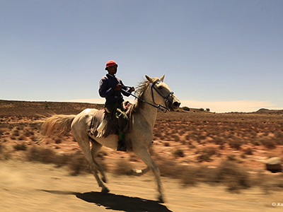 Karoo Cowboy