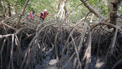 La vie secrète des mangroves (c) Thierry Berrod - Monalisa production