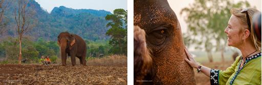 Un lieu sûr pour les éléphants en Thaïlande