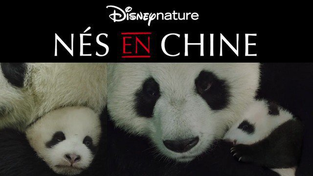 Nés en Chine - film Disneynature