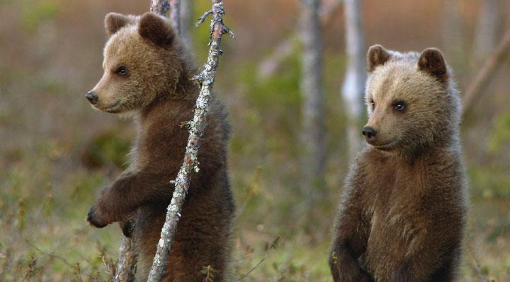 Le clan des ours