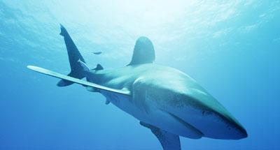 Attaque de requins à La Réunion, l'enquête