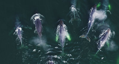 Les supers prédateurs des mers