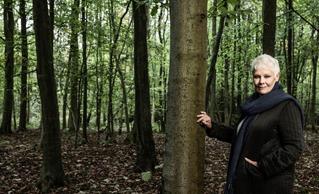 Judi Dench une passion pour les arbres ; en mars sur Ushuaïa TV